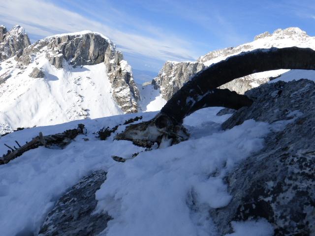 l'hiver une épreuve difficile pour la faune de montagne...
