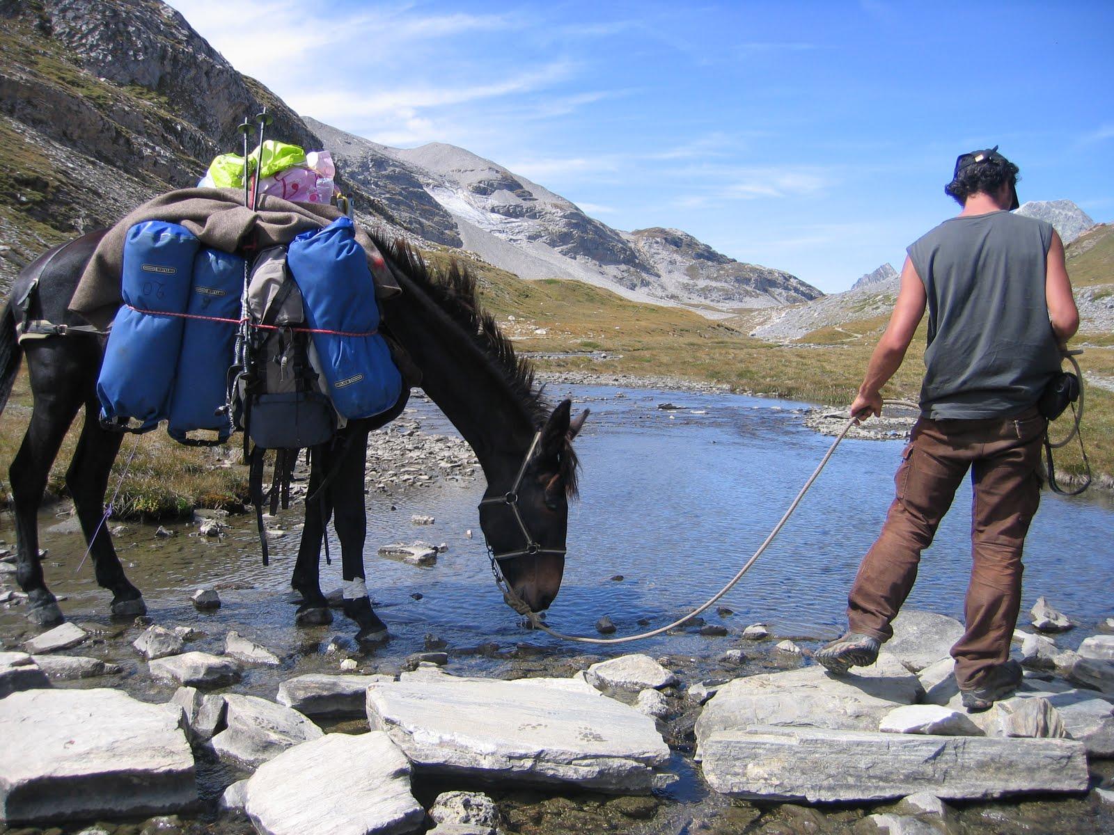 portage mule ou cheval